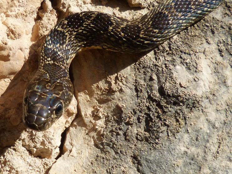black-snake-1183582_960_720